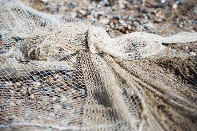 zeepaard-vissen-nederzandt-noordwijk-marieke-odekerken